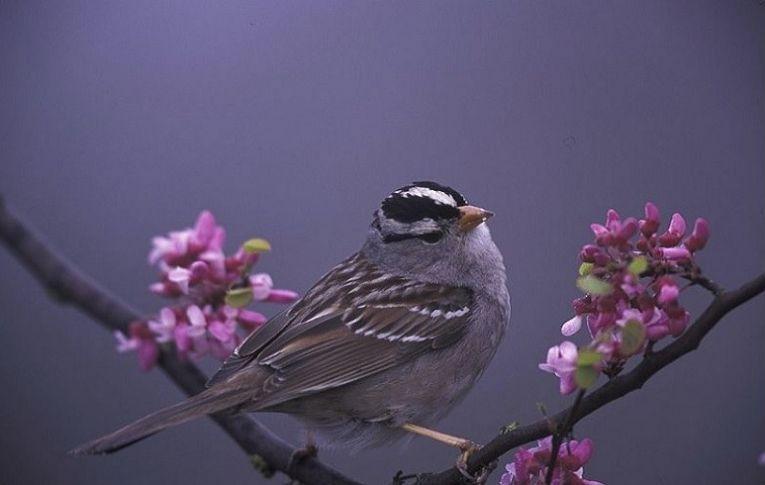 Agrotóxicos fazem pássaros perder peso e o rumo em seus voos para se reproduzir