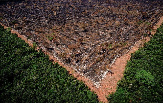 Apenas 2% das fazendas respondem por 62% do desmate ilegal da Amazônia e do Cerrado