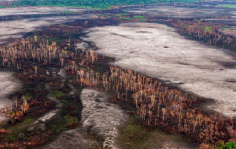 Carlos Nobre: 'Zerar o desmatamento é pouco, tem de restaurar a Amazônia'