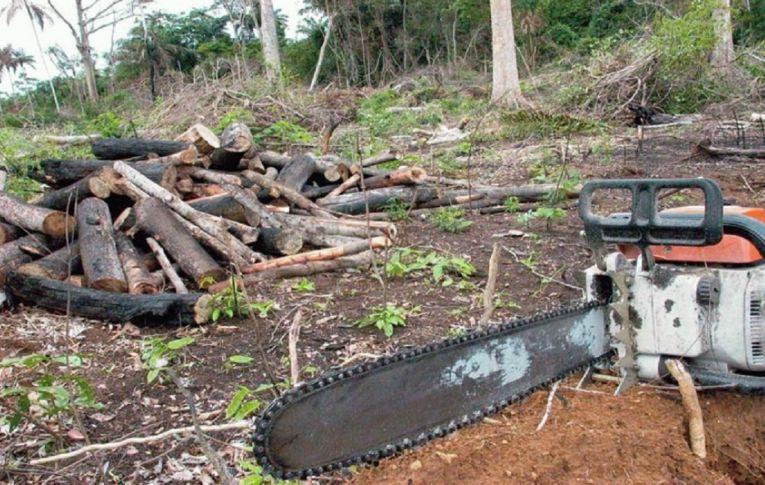 Degradação ambiental é tema do Fórum Popular da Natureza, com início nesta segunda