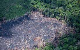 Desmatamento na Amazônia cresce 85% em 2019