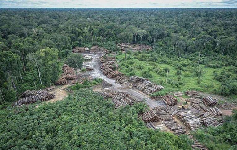 Destruição da Amazônia vai muito além do desmatamento recorde