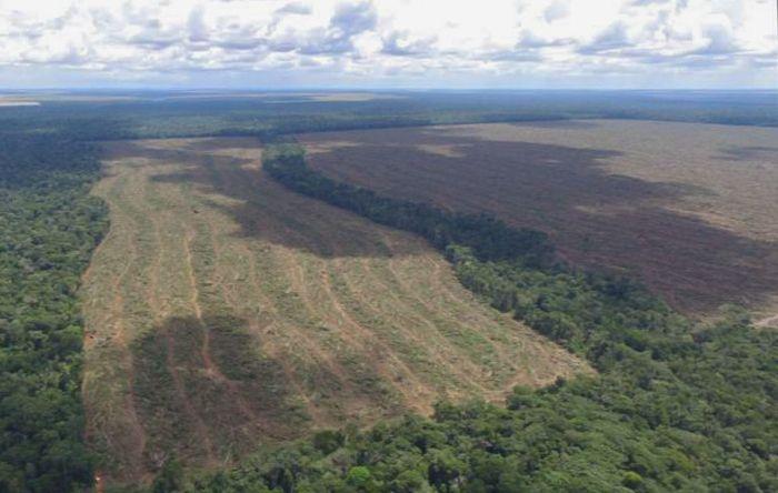 Dia Mundial do Meio Ambiente é marcado por denúncias e mobilizações nas redes