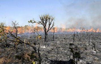 Encontro de Salles com ruralista confirma 'morte por inanição' do Meio Ambiente