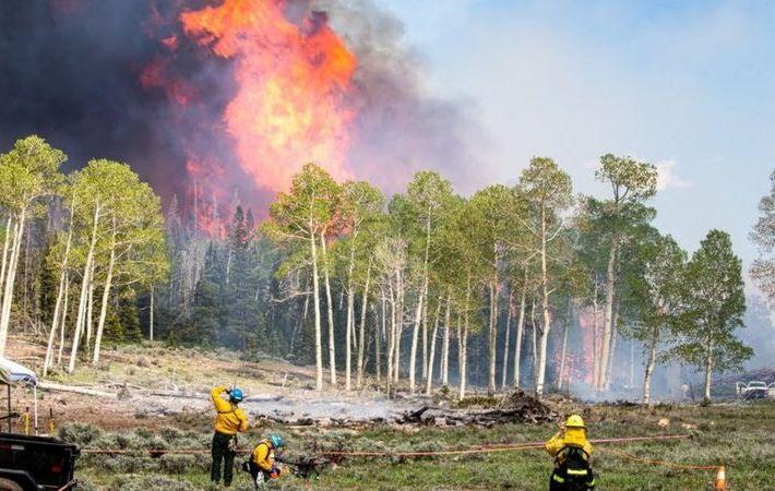 Fumaça de incêndios florestais pode ser nova rota de disseminação de doenças infecciosas