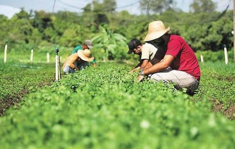 Governo elimina conselho defensor de alimentação saudável e sem agrotóxico
