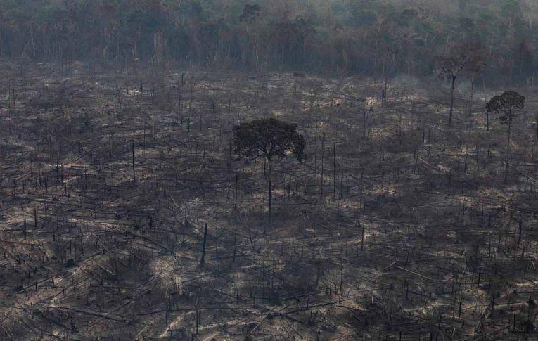 Banqueiros criticam destruição ambiental de Salles e Bolsonaro