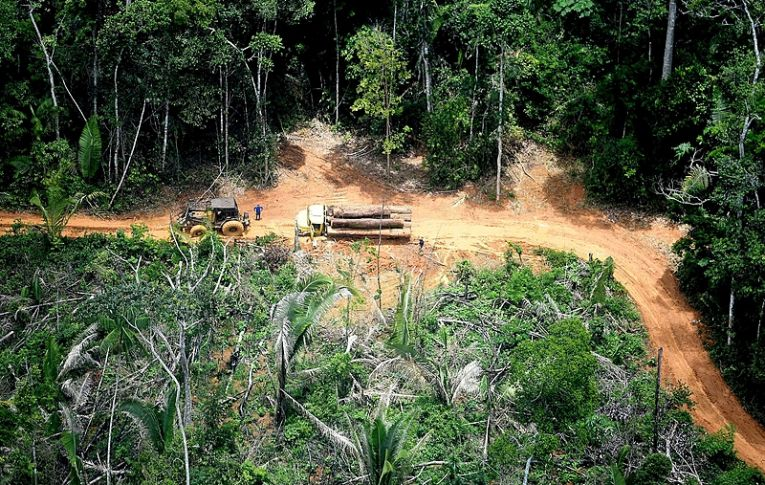 Impunidade é aliada de grileiros para desmatar florestas