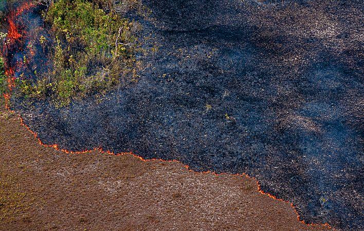 Ministério do Meio Ambiente tenta reduzir meta de preservação da Amazônia