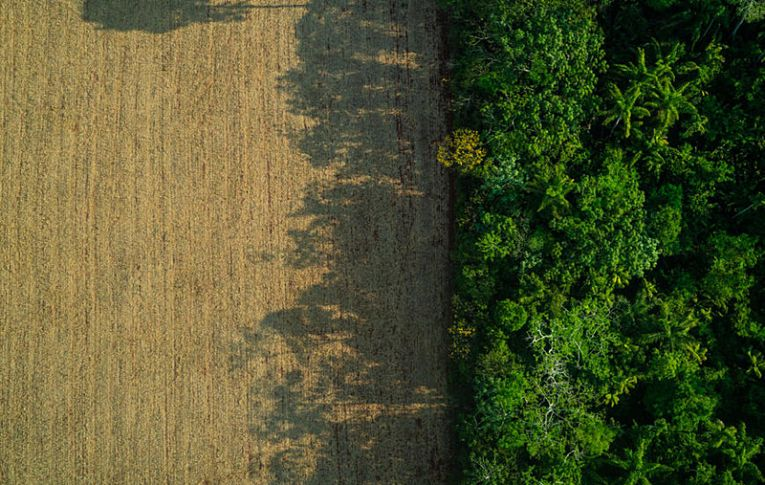 MP 910 entrega 65 milhões de hectares públicos para uso privado, denuncia procuradora