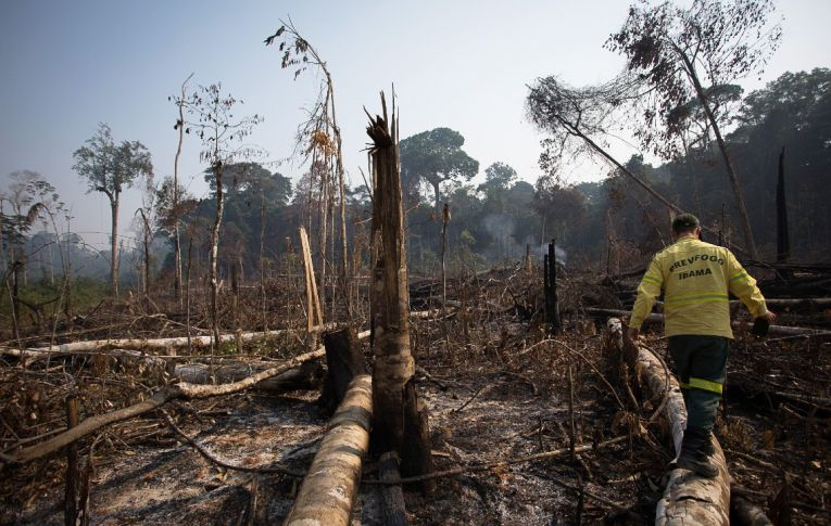 Pesos pesados entram em ação para defender Amazônia e democracia