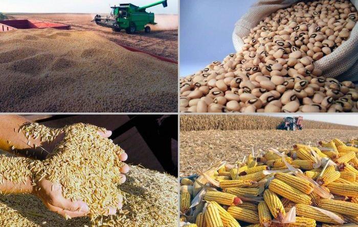 Produção para exportação: soja e milho representam 88% da safra brasileira