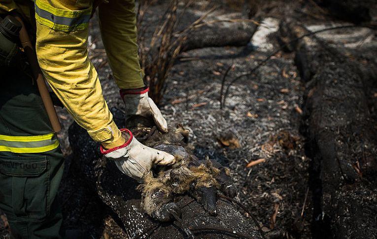 Quais são os tipos de queimadas ilegais mais utilizadas pelo agronegócio na Amazônia
